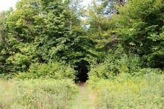 Forest Portal Passage verde secreto fotografía de archivo libre de regalías