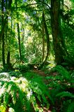 Forest in Portland Oregon. Hiking trails in Portland Oregon Stock Images