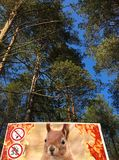 Forest and poster against the fire on a hot day stock photo