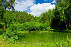 Forest pound Royalty Free Stock Photography