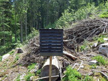 Forest preservation, pheromone trap for bark beetle Stock Photos