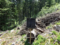 Forest preservation, pheromone trap for bark beetle Royalty Free Stock Photo
