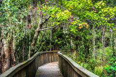Forest preserve of the Hilton Head Island Royalty Free Stock Photography