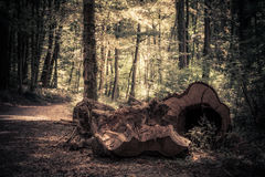 In the forest Royalty Free Stock Images