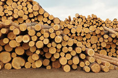 Forest product Stock Images