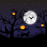 Forest with pumpkins, bats and cats. At the full moon Royalty Free Stock Images