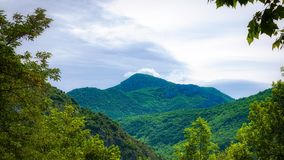 Forest of Pyrenees Mountains Royalty Free Stock Images