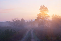 Forest at the quiet evening Royalty Free Stock Photos