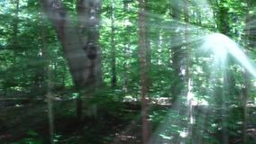 Forest with radiant sunlight stock video
