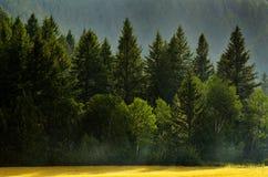 Forest Rain Storm con los descensos que bajan y los árboles enormes Foto de archivo libre de regalías