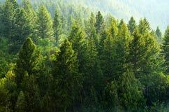 Forest Rain Storm med droppar och frodiga träd Royaltyfri Fotografi