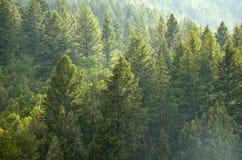 Forest Rain Storm met Dalingen en Weelderige Bomen Stock Foto