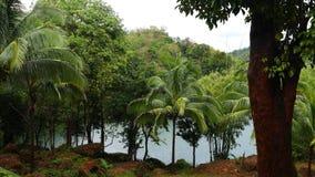 Forest Rain tropical 05 filme