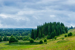 Forest in a rainy day Stock Photography