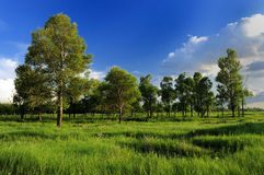 Forest ranch Stock Photography