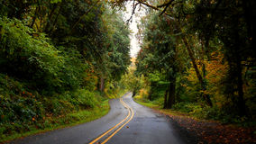 Forest Raod in Autumn. Deerhorn Road near Leaburg, OR Stock Photo