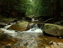 Forest rapids Royalty Free Stock Images