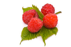 Forest raspberries Stock Photography