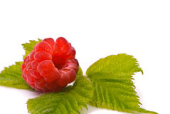 Forest raspberry Stock Photos
