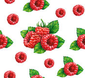 Forest raspberry  on white background. Stock Photo