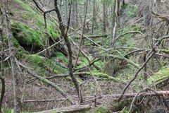 Forest ravine Royalty Free Stock Photos