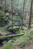 Forest ravine. Ravine in a old growth forest Royalty Free Stock Image