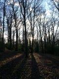Forest Rays Fotografia Stock