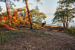 Forest in the rays of sunset. Coast of the Gulf of Finland in the Leningrad region of Russia. The outgoing sun painted the shore with red rays. Landscape, nature Stock Photo