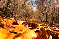 Forest ready for the winter Royalty Free Stock Photos
