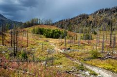 Forest recovering after a fire Royalty Free Stock Photo