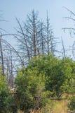 Forest Recovery After un fuego Imágenes de archivo libres de regalías
