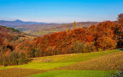 Forest with red foliage on hills in countryside. Forest with red foliage on hills in autumnal countryside. stunning view of rural grassy fields in mountainous Royalty Free Stock Photography