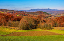 Forest with red foliage on hills in countryside. Forest with red foliage on hills in autumnal countryside. stunning view of rural grassy fields in mountainous Stock Photography