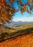 Forest in red foliage on sunny autumn day. Bench near tall trees with red foliage on hillside in Carpathian mountains with high peak in the distance on sunny stock image