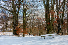 Forest with red foliage on sunny winter day Stock Photography