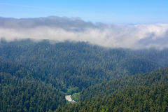 Forest Redwood National Park, California USA Stock Image