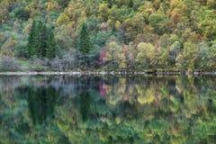 Forest Reflected auf dem Lygnstoyl See Lizenzfreie Stockbilder