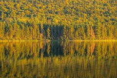 Forest Reflected On Big Nictau See in New-Brunswick stockbilder
