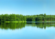 Forest reflected in a clean lake.  Stock Photography