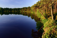 Forest reflected on lake Stock Image
