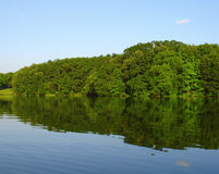 Forest reflected on lake Royalty Free Stock Image