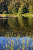 Forest reflected in a lake. Royalty Free Stock Photo