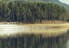 Forest reflected in lake. In Bulgaria Stock Images
