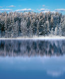 Forest reflected in lake Royalty Free Stock Photo
