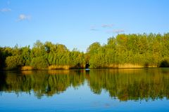 Forest reflected in a lake royalty free stock photo