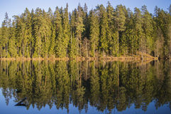 Forest reflected on lake. Trees reflected on water, just like mirror Royalty Free Stock Photos