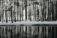 Forest Reflected in River Royalty Free Stock Photo