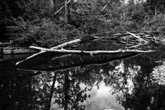 Forest reflected in a river Stock Photos