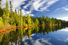 Forest reflecting in lake royalty free stock image