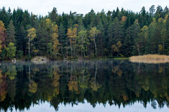 Forest reflecting in lake Stock Image